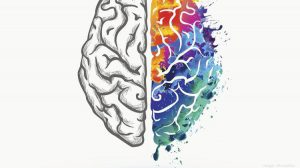 brain in color