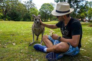 кенгуру в парка