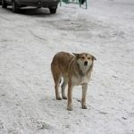 бездомно куче от Русия