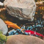 риби в аквариум
